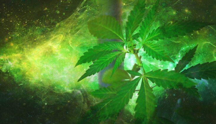 Marihuana lecznicza co leczy?